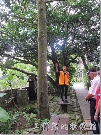 大板根森林溫泉渡假村32