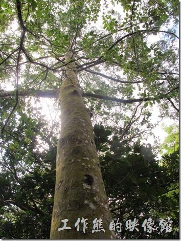 大板根森林溫泉渡假村33