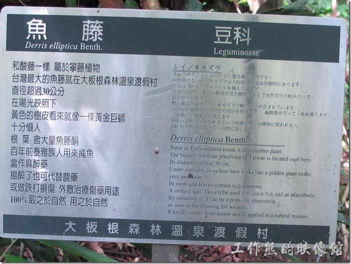 大板根森林溫泉渡假村43