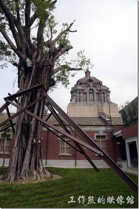 舊台南地方法院內還有一顆高齡的老榕樹,當初這老榕樹的根鬚也是造成漏水的原因之一。
