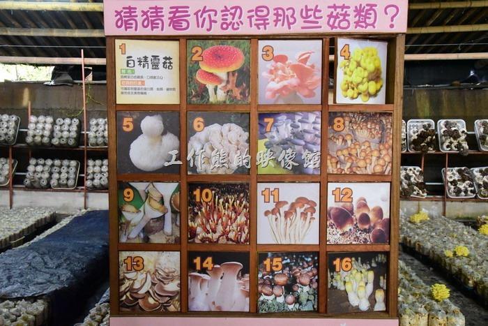看板上有16種常見的菇類,你認識幾種呢?把牌子翻到後面可以看解說。