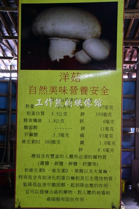台中新社菇菇部屋。洋菇介紹。