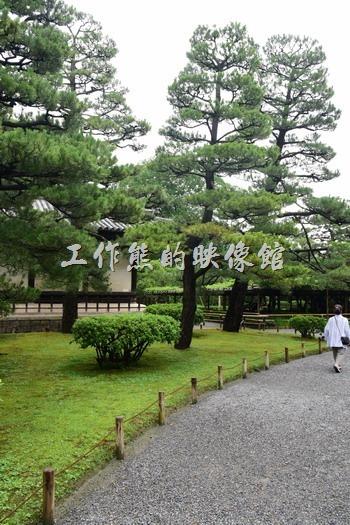 一開始進入「平等院」後映入眼簾的是鋪上碎石的步道與好幾顆有意境的松樹。