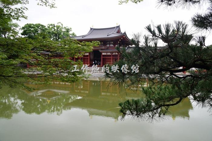 日本宇治-平等院11