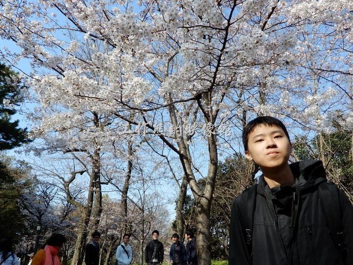 日本-大阪公園。せっかくのチャンスなので桜を背景に隣の人に頼んで撮ってくれました!ありがとうございますm(__)m