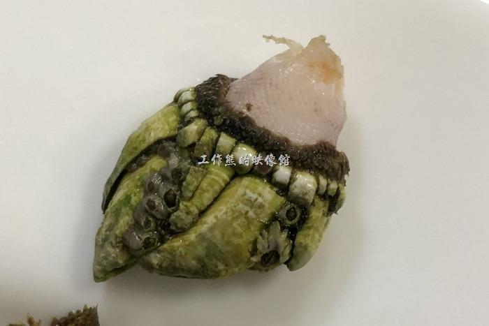 馬祖南竿-中新小吃。這「佛手」的手指部份其實是它的殼,也又是硬的部份,吃的時候要先把前面手掌黑色網格部份咬下來,就會露出其螺肉。