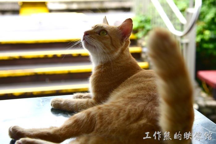 台東-山里車站至少有兩隻貓咪,不怕人的!