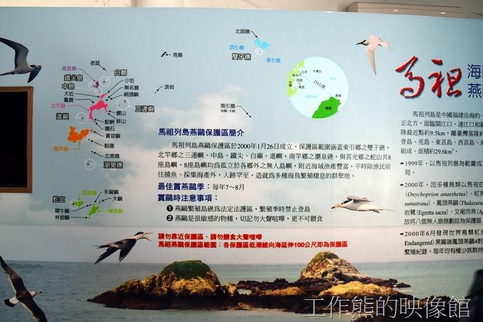 馬祖鳥類的生態介紹:海鷗