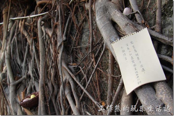 台南-321巷藝術聚落。大雨將至,沒有人知道有機個鳥巢會被風雨吹翻,有幾隻鳥會被寒冷溼透。