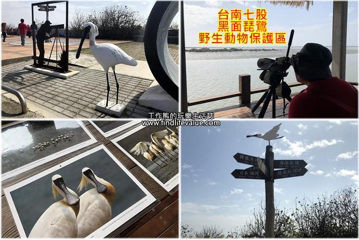 《台南旅遊》[七股]黑面琵鷺野生動物保護區賞鳥走春