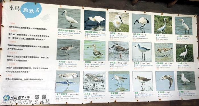 台南七股-黑面琵鷺野生動物保護區09