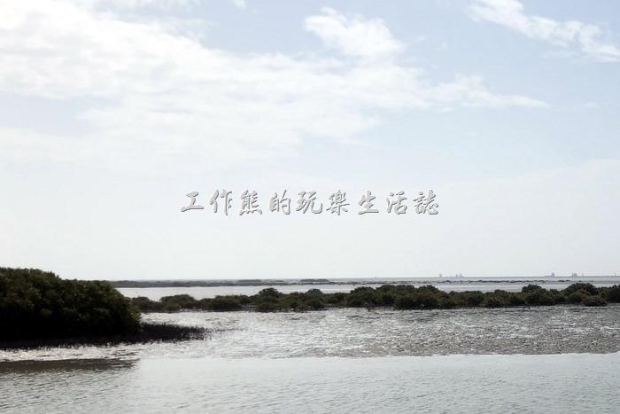 台南七股-黑面琵鷺野生動物保護區18