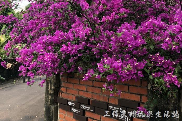 台南-321巷藝術聚落141