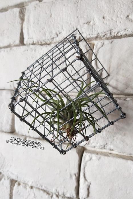 台南【豆弄.手做】咖啡早午餐。養在鐵籠裡的「空氣鳳梨」,聽說它們只要吸收空氣中的水分就可以活下來!