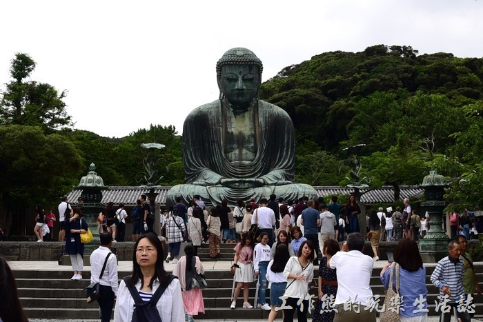 來高德院其實就是來看這尊阿彌陀佛「鎌倉大佛」的