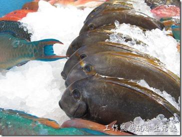 屏東後碧湖-昇日全平價海鮮。海產店的優點就是新鮮看得到,想吃什麼就直接點。